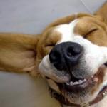 Smešan pas