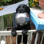 Pas i hrana