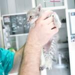 macke,price o mackama,veterinari
