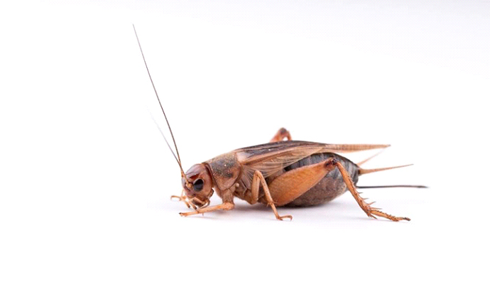 insects -9