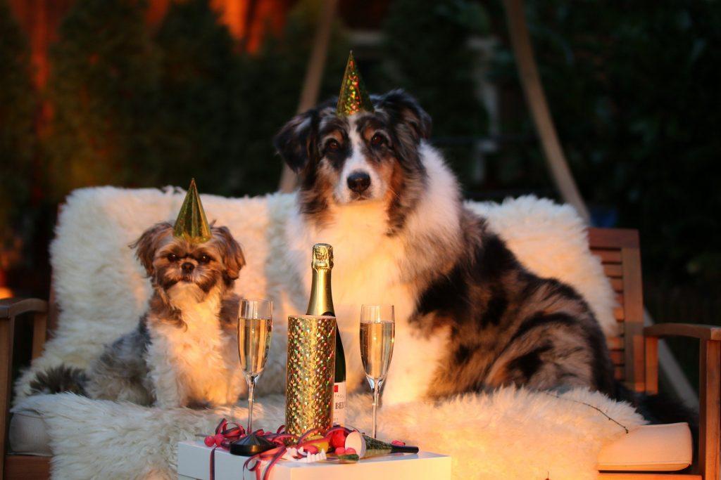 pas petarde vatromet nova godina