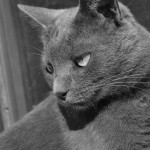 Mačke,priče o mačkama,Ivan Fenjac