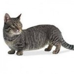 Munchk,mačke,priče o mačkama