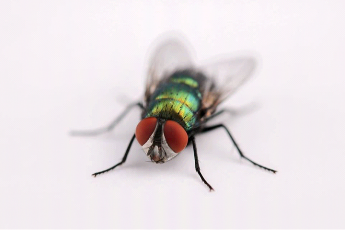 insects -1